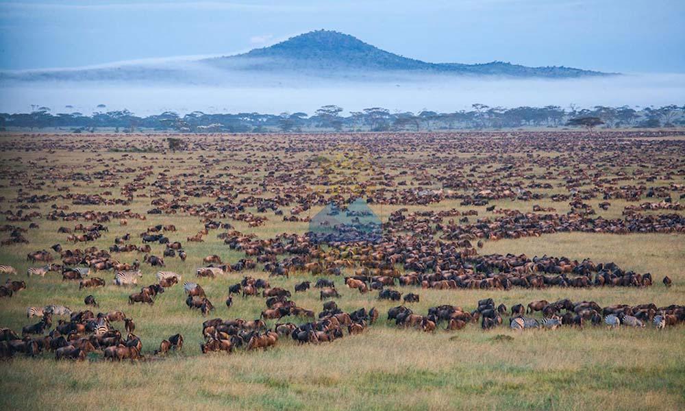 Серенгети Туры в Танзанию из Казани